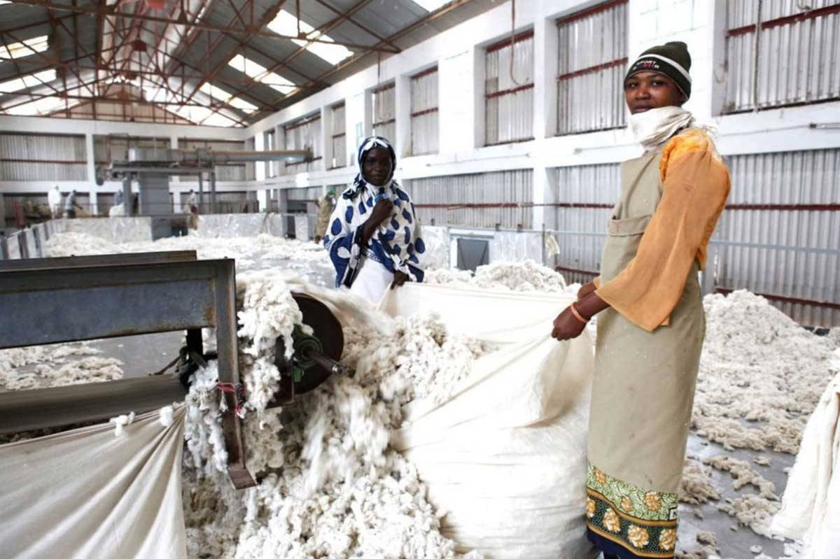Cotton Ranking 2020: Widening gap between sustainability leaders and laggers
