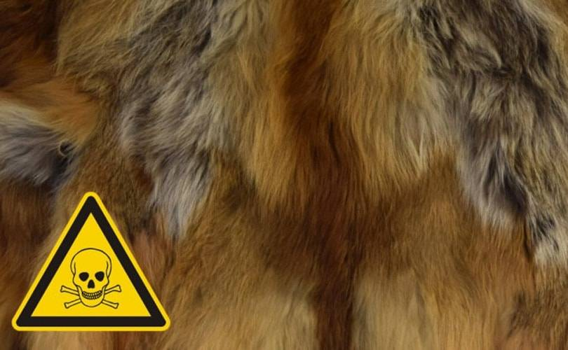 UK Government called on to ban sale of toxic fur apparel following study