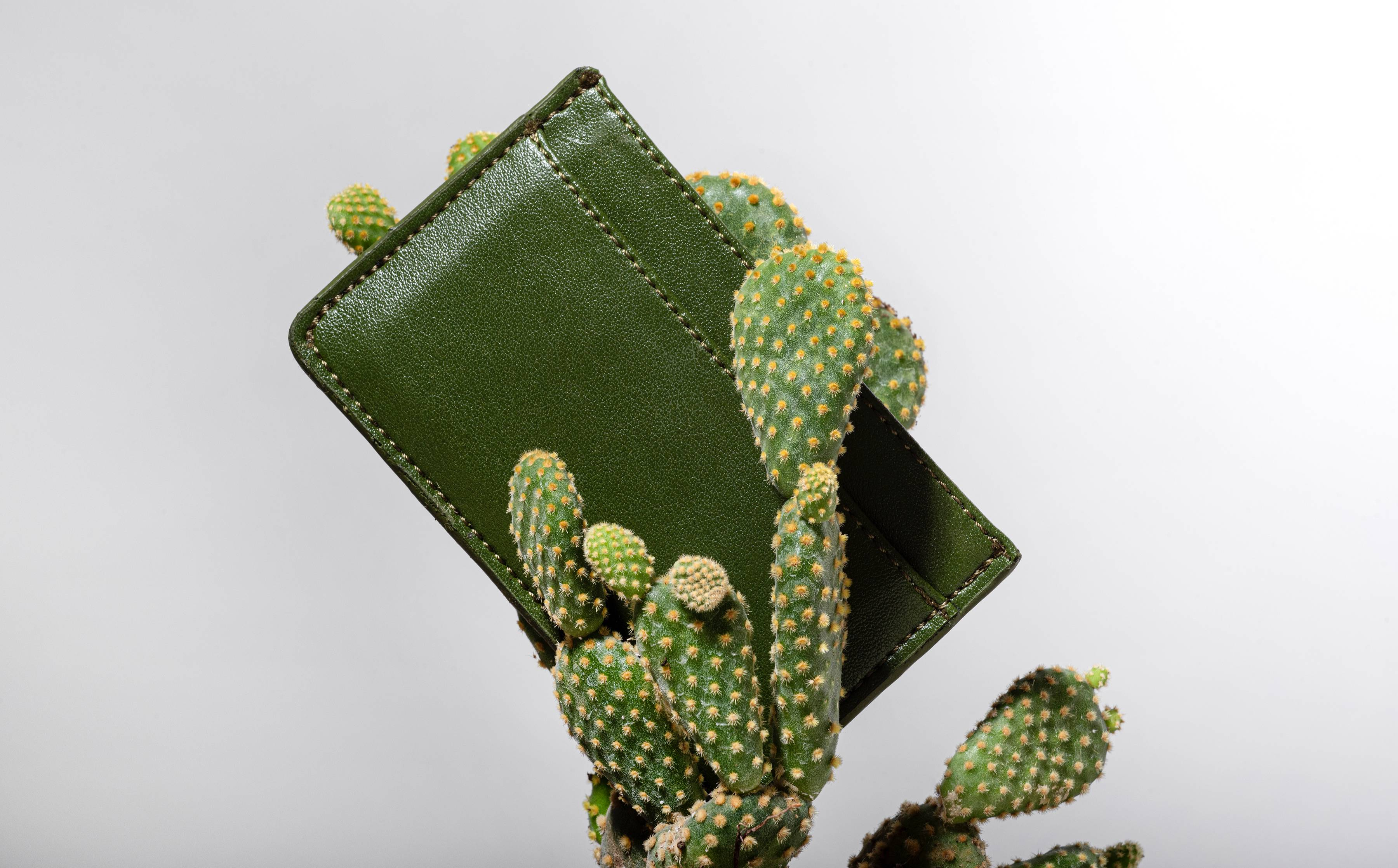 Accessories brand Cacto announces it is carbon-negative