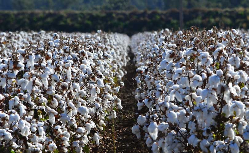 Cotton Australia aims to close gap between field and fashion