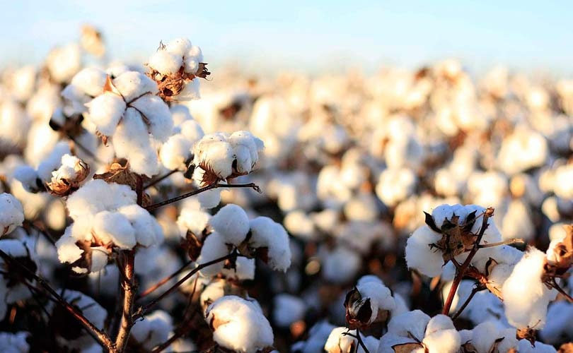 13 brands sign sustainable cotton pledge - but is organic cotton really better?