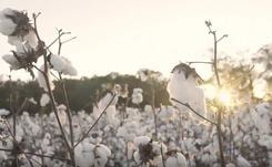 Wrangler reveals environmental benefits of sustainable farmed cotton