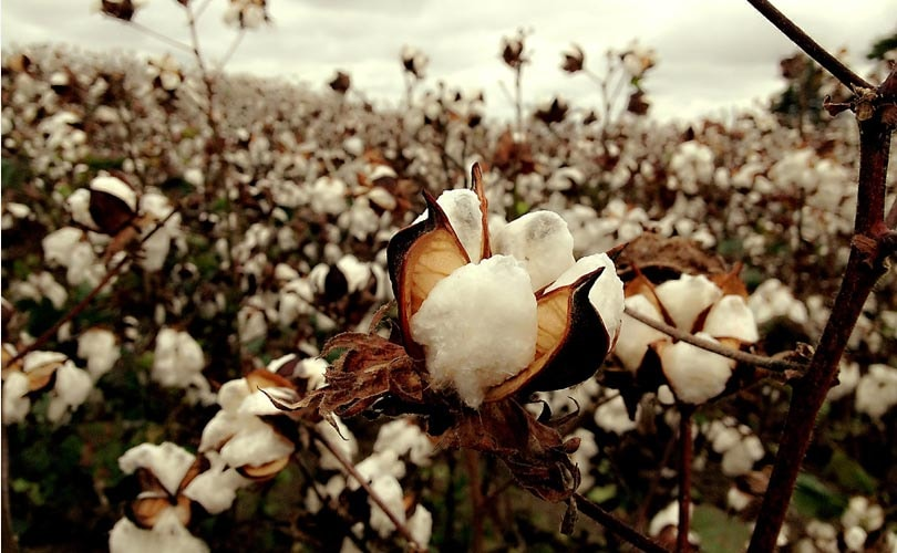 US bans imports of cotton from Turkmenistan after forced labor complaint