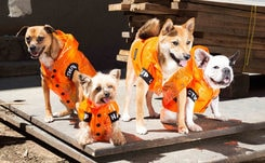 Dog fashion: the next step for luxury brands?