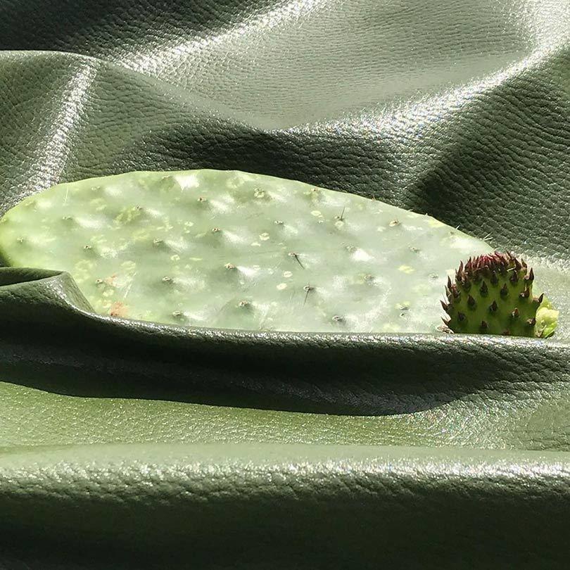 cactusleer2