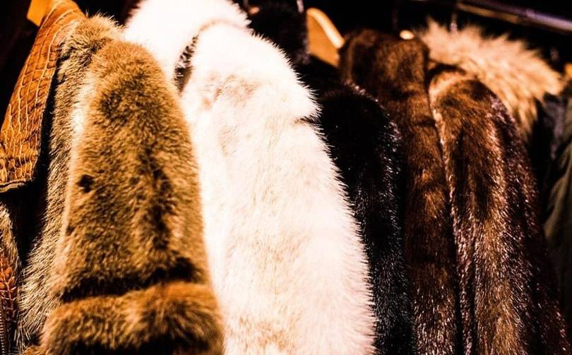 Macy's and Bloomingdale's ban the sale of fur across all platforms