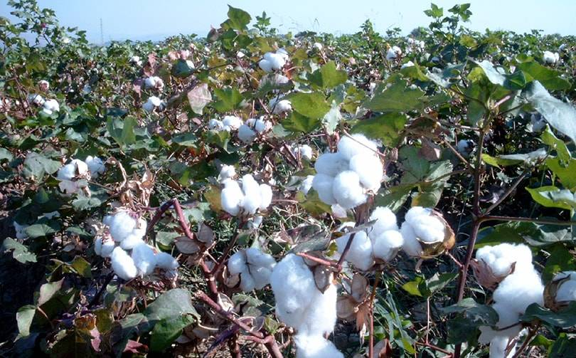 US blocks imports of cotton and textiles from Xinjiang